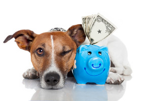 dog-saving-money