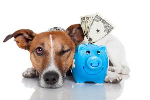 dog-saving-money